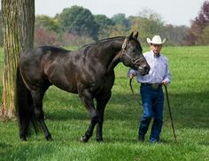 AQHA stallion Invitation Only. Gorgeous for being in his 20s!