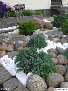 valkoinen,puutarha,piha,istutus,luonnonkivi