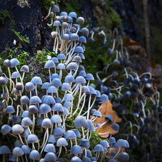 Fungi Multitude by Mark Shoesmith on 500px