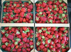 How to Store Strawberries The Best Ways to Store Strawberries || or - don't you DARE wash those strawberries before you store them!