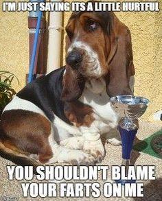10 funny basset hound memes