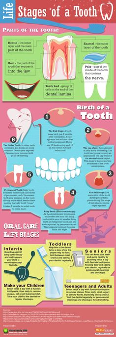 Life Stages of a #Tooth