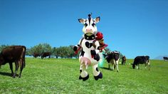 MAD | COW Albania, Cow, Illustration, Photography, Animals, Photograph, Animales, Animaux, Fotografie