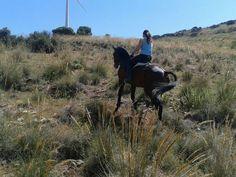 Caballos españoles en Finca San José. Pure Spanish Horses. España Spain. www.yeguadasanjose.com