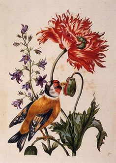 and birds... by bird-obsessed great grandmother would have LOVED this.