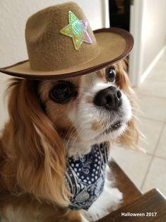 Nancy's Maxie is SHERIFF for Halloween!