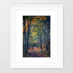 Forest of Dreams framed print - https://society6.com/product/forest-of-dreams-677_framed-print?curator=vickifield