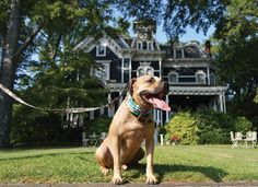 From the mountains to the coast, there is something for everyone - including your furry four-legged best friend - to explore in Georgia. Dog Friends, Best Friends, Rome Travel, Four Legged, Your Dog, Labrador Retriever, Georgia, Things To Do, Pup