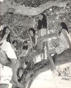 SHINOYAMA Kishin Asian Doll, Concert, Girls, Toddler Girls, Daughters, Maids, Concerts