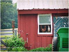 And we all enjoy the view... :-) Rural chicken coop or barn. Somewhere in the northeast.