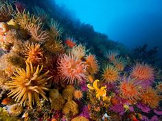 #nature #photography #underwater #ocean #landscapes #predators #baby #animals #birds