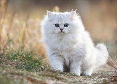 adorable-cat-23-images-21