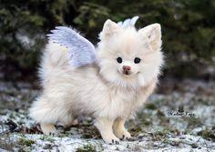 Custom Order Small dog Pomeranian Chihuahua fluffy by MalinaToys
