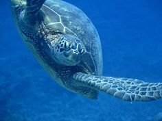 One of the friendly encounters while diving with the Nai'a!