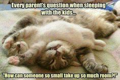 Every parents question when sleeping with the kids. How can someone so small take up so much room?