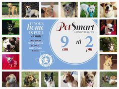 ADOPTION AND DONATION EVENT SATURDAY, JULY 25 9AM-2PM PETSMART LONGVIEW,TX PLEASE SHARE!!!  Come see us today at PetSmart from 9am-2pm and adopt your new best friend from Texas Star Rescue in Longview, Texas #TSRadopt #woof #helpsavealife #purr #dog #rescuedismyfavoritebreed #cat #texasstarrescue #adoptdontshop #puppies #kitties #meow #petsmart #chichi #pitbull #lab #terrier #GSD #germanshepherd #lab #beagle #shihtzu #basset #poodle #doxie #ratterrier