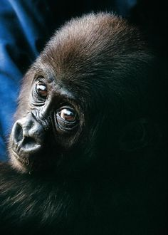 Our beautiful Nona......this is her rescue:  http://www.youtube.com/watch?v=3LWm6dElorE   Photo © Pip Hughes