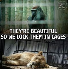 """Question all that you've been taught about human domination over all other species and our assumed """"rights"""" over the bodies and lives of nonhuman individuals. Learn reverence for life. Live vegan. www.vegankit.com and freefromharm.org"""