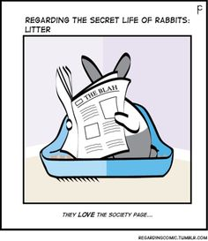 Meanwhile, your bunny in the toilet is reading the current social page column. House Rabbit, Bunny Rabbit, Rabbit Litter, Secret Life Of Rabbits, Animals And Pets, Cute Animals, Funny Animals, Bunny Quotes, Bunny Care