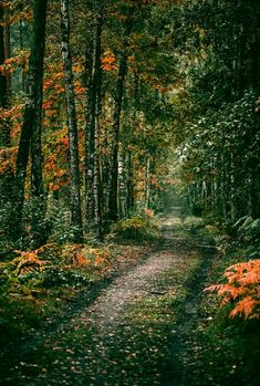 Autumn forest walk (Berlin, Germany) by Denny Bitte I hope we met someday in a … – Natur - To Have a Nice Day Beautiful World, Beautiful Places, Beautiful Pictures, Beautiful Forest, Mother Earth, Mother Nature, Natur Wallpaper, Autumn Forest, All Nature