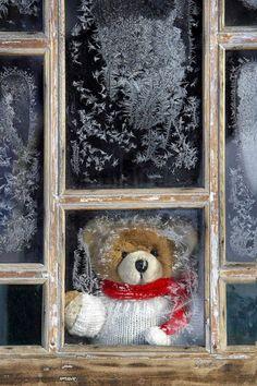 Teddy bear in a frosty window