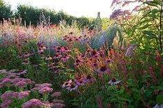 Lady farm, somerset: Designer, judy pearce - new perennial border with sedum autumn joy, echinacea rubinstern, eupatorium, perovskia blue spire.  By Clive Nichols.