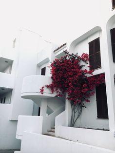#mallorca #white #flower #summer