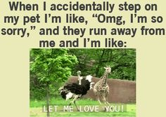 When I Accidentally Step On My Pet And They Runaway funny cute animals jokes dog animal pets gifs lol gif funny sayings humor funny animals