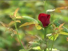 SZERETET Plants, Flora, Plant