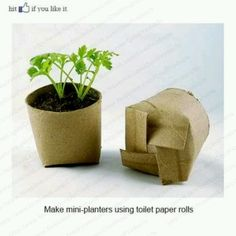 Planter using used toilet paper roll.