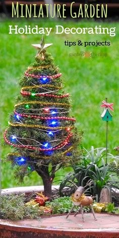 Deck out your miniature garden for Christmas! How to choose and care for outdoor miniature trees and DIY decorations for the holidays.