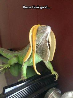 Lizard Dreadlocks