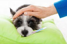 Pets também sofrem com reações alérgicas e demandam cuidados e tratamento contínuo. Saiba tudo sobre o assunto!
