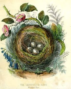 1860 bird nest print - free image.....has crazy potential for embellishment.