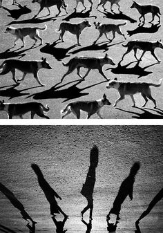 Surreal Shadow Photography by Alexey Bednij | Inspiration Grid | Design Inspiration