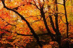Red Autumn by Andrés López Moreno