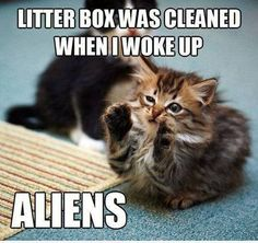 Funny pictures about Aliens everywhere. Oh, and cool pics about Aliens everywhere. Also, Aliens everywhere. Funniest Cat Memes, Funny Cat Memes, Funny Cats, Funny Animals, Cute Animals, Dog Memes, Crazy Animals, Funny Comics, Crazy Cat Lady