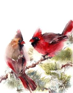 Aquarelle, oiseau Print, peinture aquarelle Art impression, le Cardinal rouge peinture, Bird Wall Art