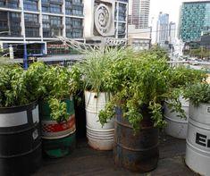 oil drum planter - Google Search