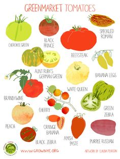 Tomato Poster  Hurricane Irene Fundraiser by claudiagpearson, $25.00