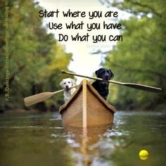 The inspiration of dogs!