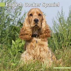 Engelse Cocker Spaniel Kalender 2013