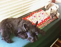 Beth made small Kennel Quilts for animal shelters.