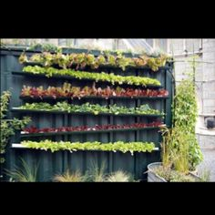 Steal impressive Exceptional Rain Gutter Garden Gutter Vertical Garden design recommendations from Virginia Coleman to upgrade your living area. Vertical Farming, Vertical Gardens, Vertical Planting, Vertical Hydroponics, Diy Hydroponics, Gutter Garden, Fence Garden, Fence Plants, Vegetables Garden