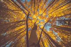 The 9 Best Hikes in Rocky Mountain National Park to See Fall Colors Forest Wallpaper, Photo Wallpaper, Worms Eye View, Aspen Trees, Autumn Forest, Rocky Mountain National Park, Best Hikes, Rocky Mountains, Loki