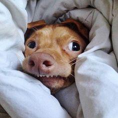 Image from http://ididafunny.com/wp-content/uploads/2013/12/tuna-funny-little-abandon-dog-06.jpg.