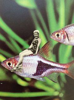Collage. Bonnita Postma. Je me pavane à dos de poisson. #midi #folie http://bonnitapostma.nl/