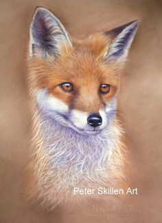 """Fox cub  Pastel painting  16"""" x 12""""   Original for sale  £320 (Framed)  15""""x 13"""" Limited edition prints also available."""