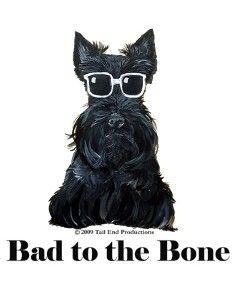 Sage, silly, stubborn, or sweet, you gotta love a Scottie!