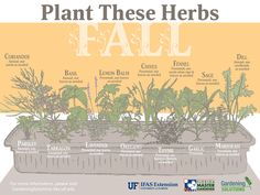 Solutions Infographics - Gardening Solutions - University of Florida, Institute of Food and Agricultural Sciences - Fall is a great time for planting herbs in Florida! -Gardening Solutions Infographics - Gardening Solutions - University of Flo. Gardening Websites, Gardening For Beginners, Backyard Garden Landscape, Garden Landscaping, Balcony Gardening, Herb Gardening, Garden Planters, Organic Gardening, Agricultural Science